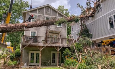 Why should you trim trees?